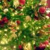 クリスマスツリー2016